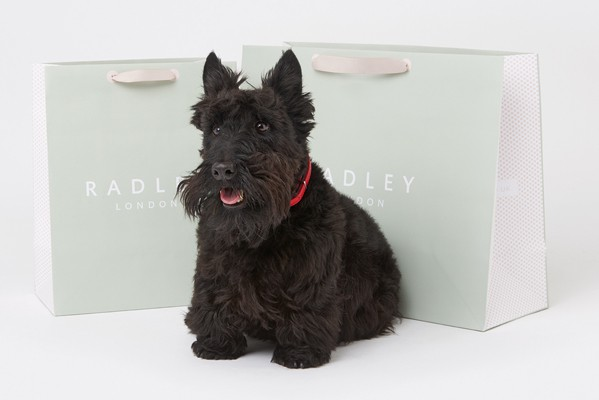 New Arrivals at Radley
