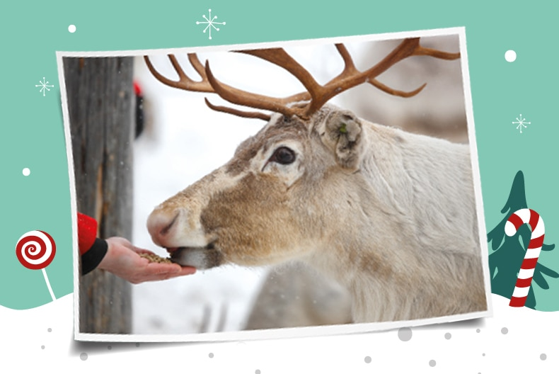 Discover Festive Fun with our four legged friends